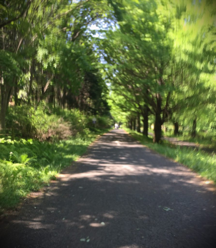 昭和記念公園サイクリングコース